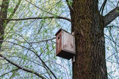 Bird house on tree at spring. Leaves blooming stock photo