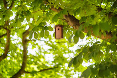 Bird house on a tree in summer, between green foliage.  royalty free stock photo