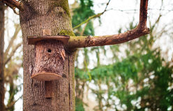 Bird house, tree trunk Royalty Free Stock Photos