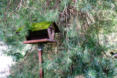 Bird house with tree on a wooden stick stock photo