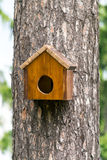 Bird house on a tree Royalty Free Stock Image