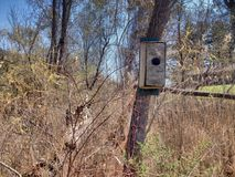 Bird house on a tree in the woods Stock Photography
