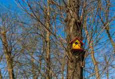 Bird house on a tree Royalty Free Stock Photography