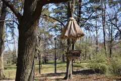 The bird house. A bird house in the trees royalty free stock photography