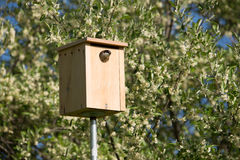 Bird House with a View. Bird peaking out of her birdhouse.  Blue sky but no blue birds; just a sparrow and her friends Royalty Free Stock Images