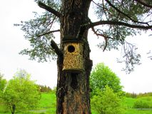 Birdhouse on a old pine. Knock, knock its anybody at home royalty free stock image