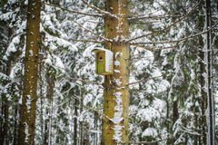 Bird house in winter in the forest Royalty Free Stock Image