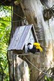 Bird house and wooden bird Stock Photos