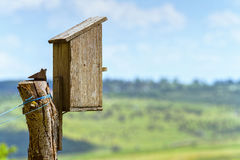 Bird house wooden box in summer time Royalty Free Stock Photo