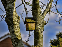 Bird House on Woodland Path in Spring in Burnley England Royalty Free Stock Image