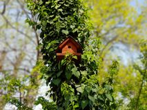 Bird house in the woods on a sunny day royalty free stock photos