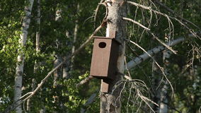 Bird House Woods Trees Nature stock video footage