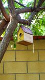 Bird House. Yellow bird house hanging on a tree branch stock image