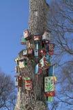 Bird Houses. Painted bird house community on the tree Royalty Free Stock Photos