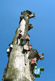 Bird houses. Old tree with many bird houses Royalty Free Stock Images