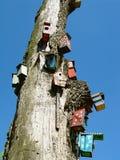 Bird houses. On old tree Stock Photos
