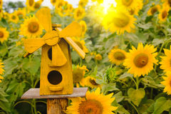 Bird Houses on Sunflowers field background with lighting flare effect. Stock Photography