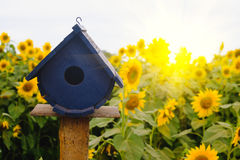 Bird Houses on Sunflowers field background with lighting flare effect. Stock Images