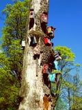 Bird houses on tree. Colour bird houses in park Stock Photo
