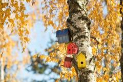 Bird houses on the tree Stock Image