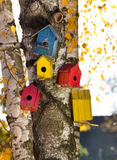 Bird houses on the tree Stock Images