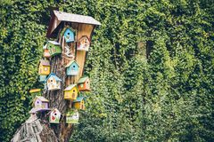 Bird houses on the tree. With green leaves on background Stock Photo