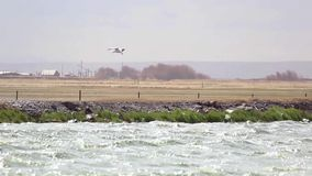 Bird hovering over very windy water Royalty Free Stock Photography