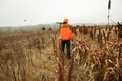 Bird hunter in field shooting Pheasant Stock Photo