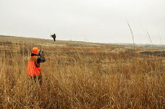Bird hunter in field shooting Pheasant Stock Photos