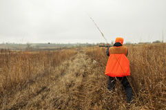 Bird hunter in field shooting Pheasant Stock Image