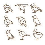 Bird Icons, Thin Line Style, Flat Design. Vector royalty free illustration