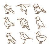 Bird Icons, Thin Line Style, Flat Design Stock Photo