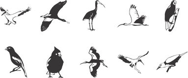 Bird Illustration Collection Royalty Free Stock Image