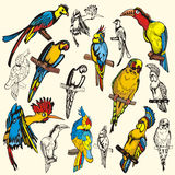 Bird illustration series Royalty Free Stock Photos