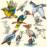 Bird illustration series Royalty Free Stock Images
