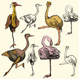 Bird illustration series Stock Photography