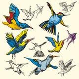 Bird illustration series Stock Photos
