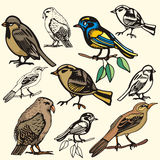 Bird illustration series Royalty Free Stock Photo
