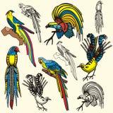 Bird illustration series Stock Photo
