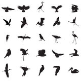 Bird illustrations. Different silhouette of birds Stock Photos