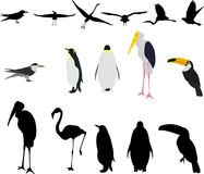 Bird illustrations. Lots of bird illustrations and silhouettes Royalty Free Stock Images