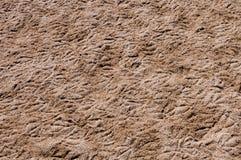 Bird imprints. Background of bird imprints on the sand Stock Image