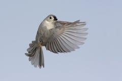 Free Bird In Flight Stock Photos - 9502783