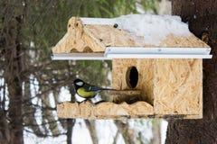 Bird In The Birdhouse Stock Photos
