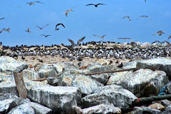 Bird Island Stock Images