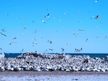 Bird Island Stock Image
