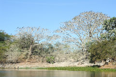 Bird island on the lake of Suchitlan near Suchitoto Stock Photo