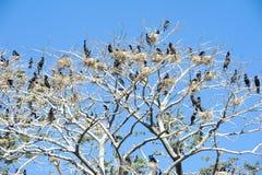 Bird island on the lake of Suchitlan near Suchitoto Royalty Free Stock Photo