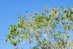Bird island on the lake of Suchitlan near Suchitoto Stock Photos