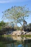 Bird island on the lake of Suchitlan near Suchitoto Stock Image